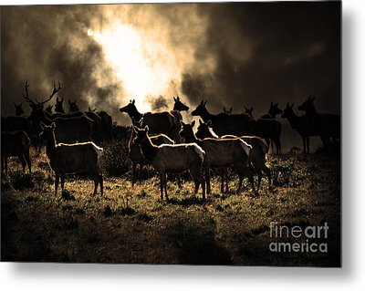 Tomales Bay Harem Under The Midnight Moon - 7d21241 - Sepia Metal Print by Wingsdomain Art and Photography