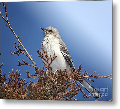Top Of My Game Metal Print by Betty LaRue
