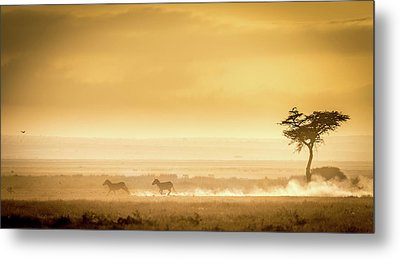 Training, Because The Lions Await. Metal Print
