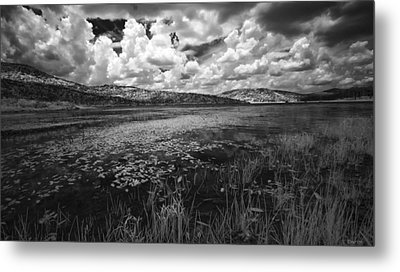 Metal Print featuring the photograph Tranquil by Yvonne Emerson AKA RavenSoul