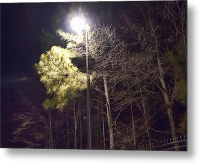 Tree And Streetlight  Metal Print by J Riley Johnson