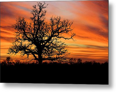 Tree At Sunset Metal Print by Elizabeth Budd