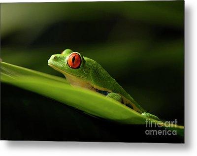 Tree Frog 8 Metal Print by Bob Christopher