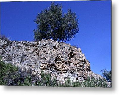Tree Growing In Rock Metal Print