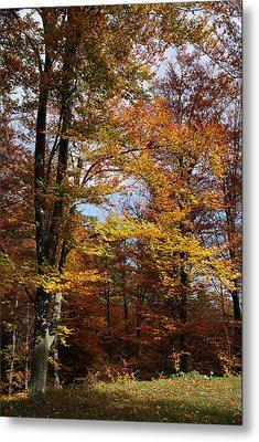 Tree In Autumn Light Metal Print by Bogdan M Nicolae