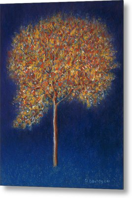 Tree In Blossom Metal Print by Peter Davidson