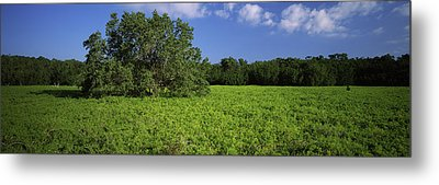 Tree In The Field, Everglades National Metal Print by Panoramic Images