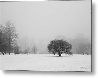 Metal Print featuring the photograph Tree In The Fog by Ed Cilley