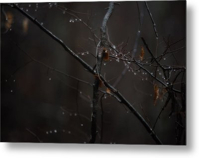 Tree Limb With Rain Drops 2 Metal Print by J Riley Johnson
