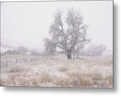 Metal Print featuring the photograph Tree Of Storm by Kristal Kraft
