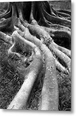 Tree Roots Metal Print