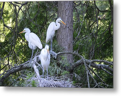 Metal Print featuring the photograph Triplets by Judith Morris