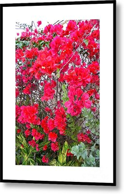 Tropical Flowers Of South Florida Metal Print by Dora Sofia Caputo Photographic Design and Fine Art