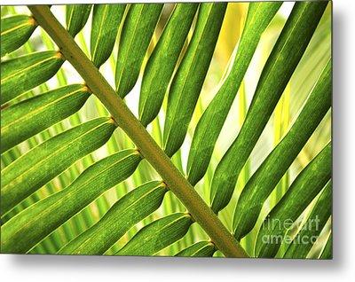 Tropical Leaf Metal Print by Elena Elisseeva
