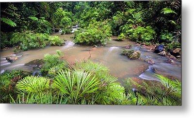 Tropical River Bank Metal Print by Alex Hyde