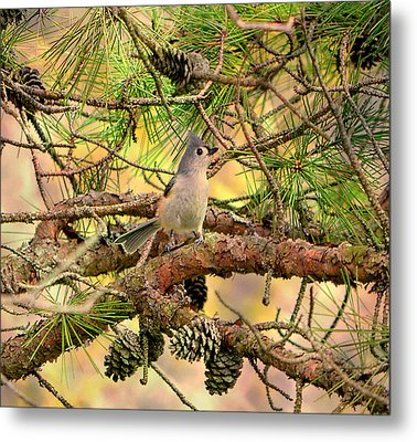 Tufted Titmouse Metal Print by Deena Stoddard