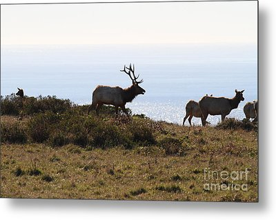 Tules Elks Of Tomales Bay California - 7d21230 Metal Print by Wingsdomain Art and Photography
