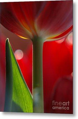 Tulip Bokeh Metal Print by Trena Mara