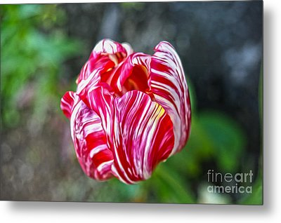 Tulip Metal Print by Nur Roy