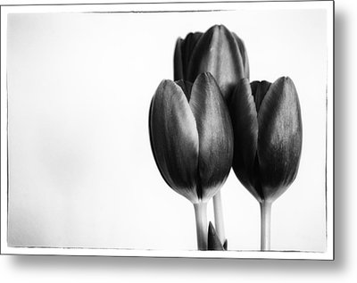 Tulip Trio Metal Print by Shelly Gunderson