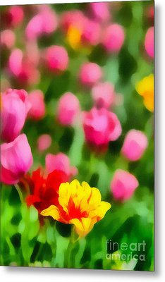 Tulips Metal Print by Amy Cicconi