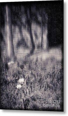 Tulips And Tree Shadow Metal Print by Silvia Ganora