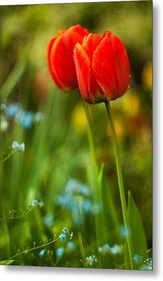 Tulips In Garden Metal Print