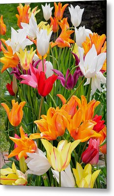 Metal Print featuring the photograph Tulips Tulips by Haleh Mahbod