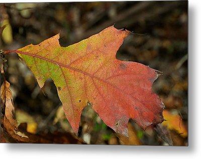 Turn A Leaf Metal Print by JAMART Photography