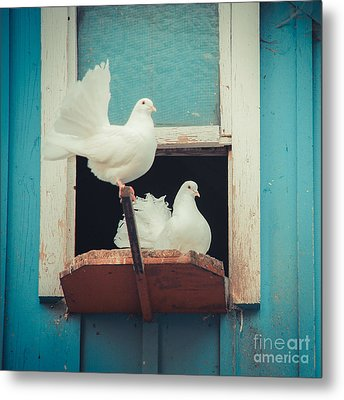 Turtle Doves 1x1 Metal Print by Hannes Cmarits