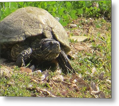 Metal Print featuring the photograph Turtle Up Close by Ella Kaye Dickey