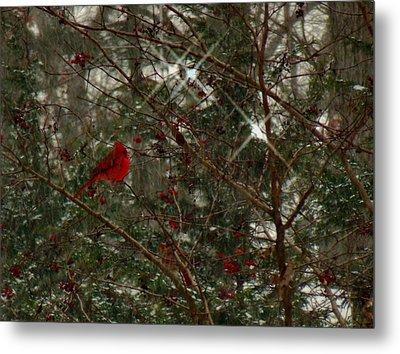 Twinkle Twinkle Little Bird Metal Print by Sharon Costa