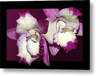 Two Baby Orchids Metal Print by Phyllis Denton