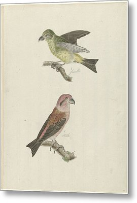 Two Crossbills, Possibly Christiaan Sepp Metal Print by Quint Lox