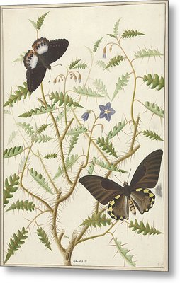 Two Exotic Butterflies On A Blooming Bush Metal Print
