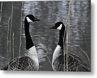 Two Goose Tango Metal Print by Mary Zeman