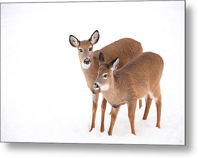 Two In The Snow Metal Print by Karol Livote