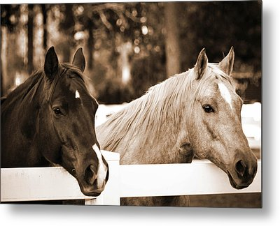 Two Sweet Horses Metal Print