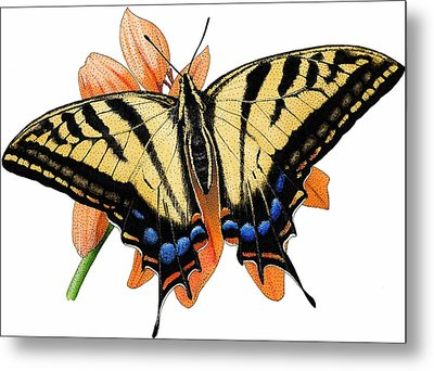 Two Tailed Swallow Butterfly Metal Print
