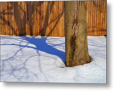 Two Trees In One Metal Print by Paul W Faust -  Impressions of Light