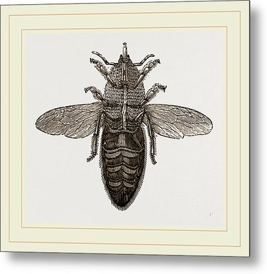 Under View Of Neuter Bee Metal Print by Litz Collection