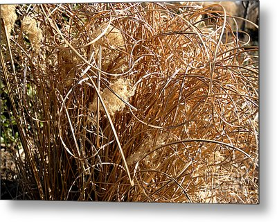 Metal Print featuring the photograph Unruly Curls by Lena Wilhite