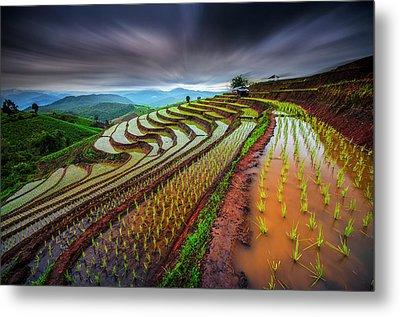 Unseen Rice Field Metal Print