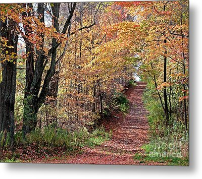 Up The Wooded Lane Metal Print by Christian Mattison