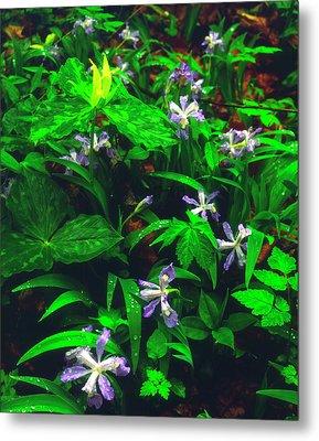 Usa, Tennessee, Trillium And Iris Metal Print