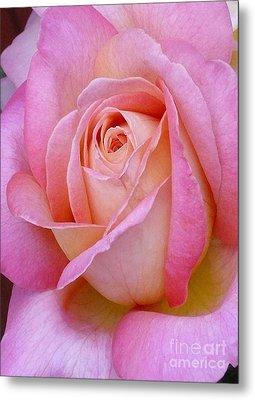 Valentine Pink Rose Bud Metal Print by Paul Clinkunbroomer
