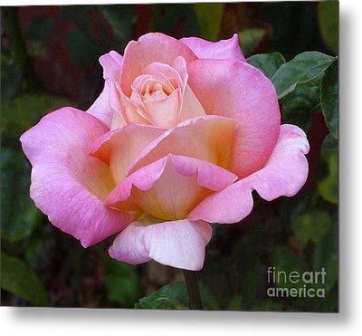 Valentine Pink Rose Metal Print by Paul Clinkunbroomer