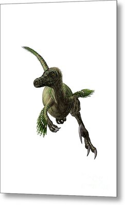 Velociraptor, White Background Metal Print