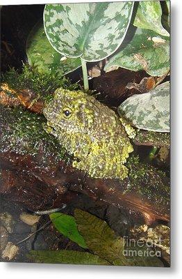 Vietnamese Mossy Frog Metal Print by Sara  Raber