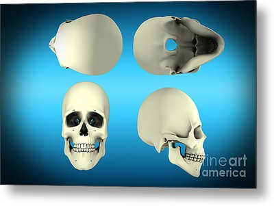 View Of Human Skull From Different Metal Print by Stocktrek Images